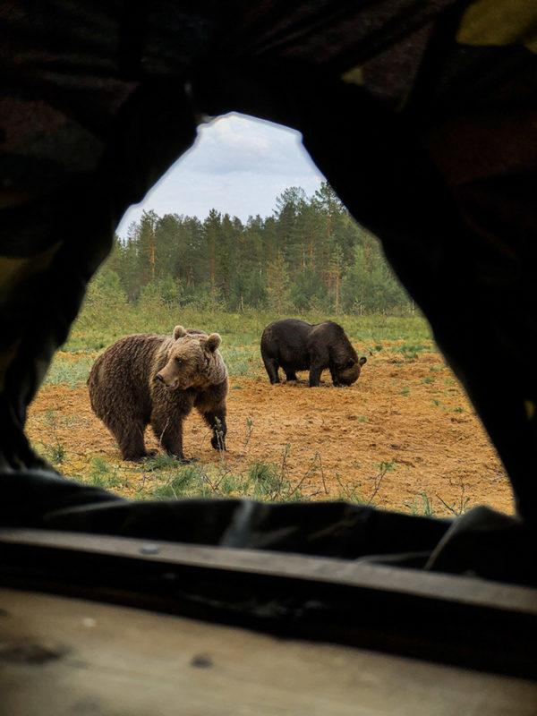 A look through the window of our hide-out.